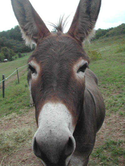 hello-there-donkey-366863-s